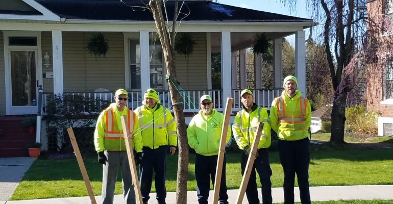 Department of public works planting trees
