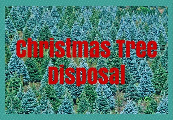 Christmas tree disposal graphic